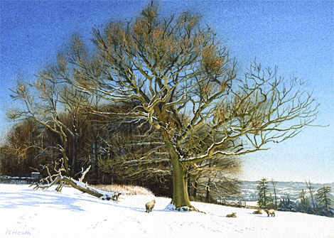A watercolour painting of a tree on Ranmore Common, Surrey after a snowfall at Christmas by Margaret Heath.