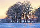 A watercolour painting of trees on snow covered Epsom Downs at sunset by Margaret Heath.